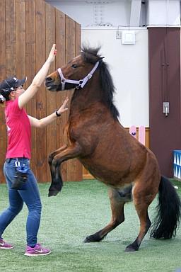 Pony1_2