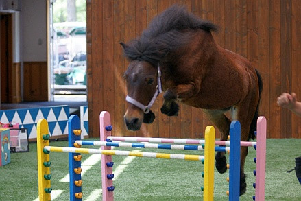 Pony2_2