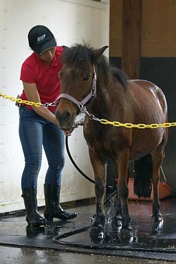 Pony3_3