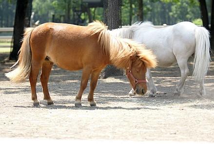 Pony4_2